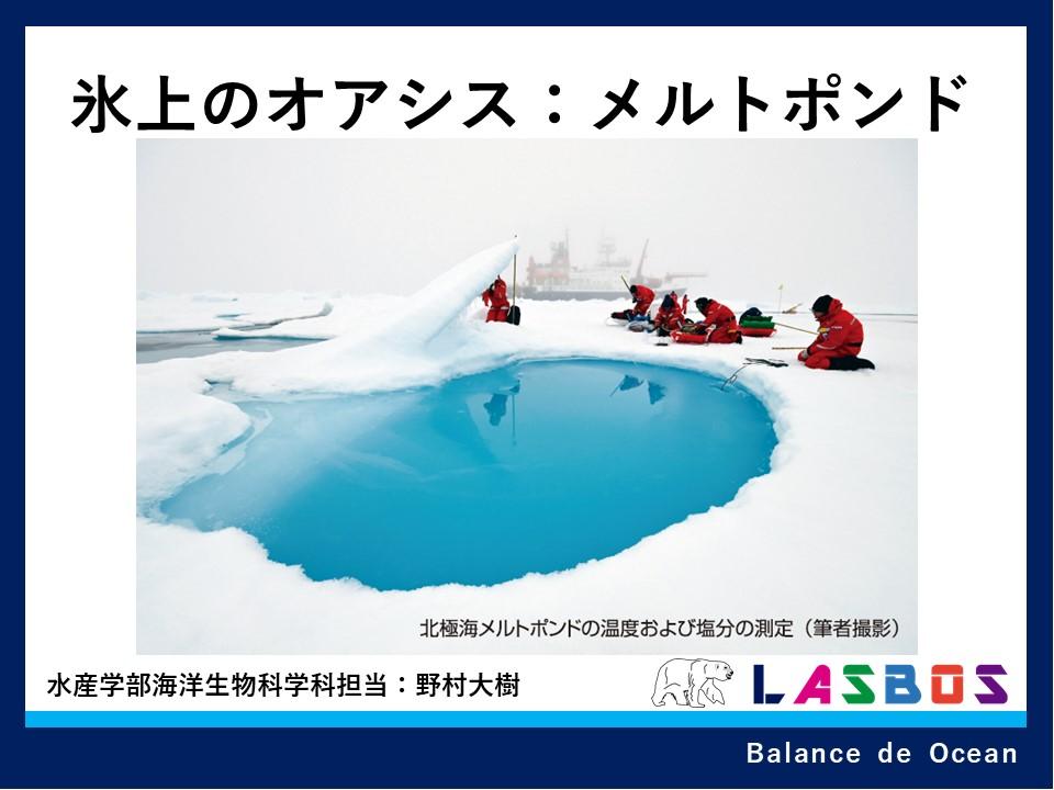 氷上のオアシス:メルトポンド
