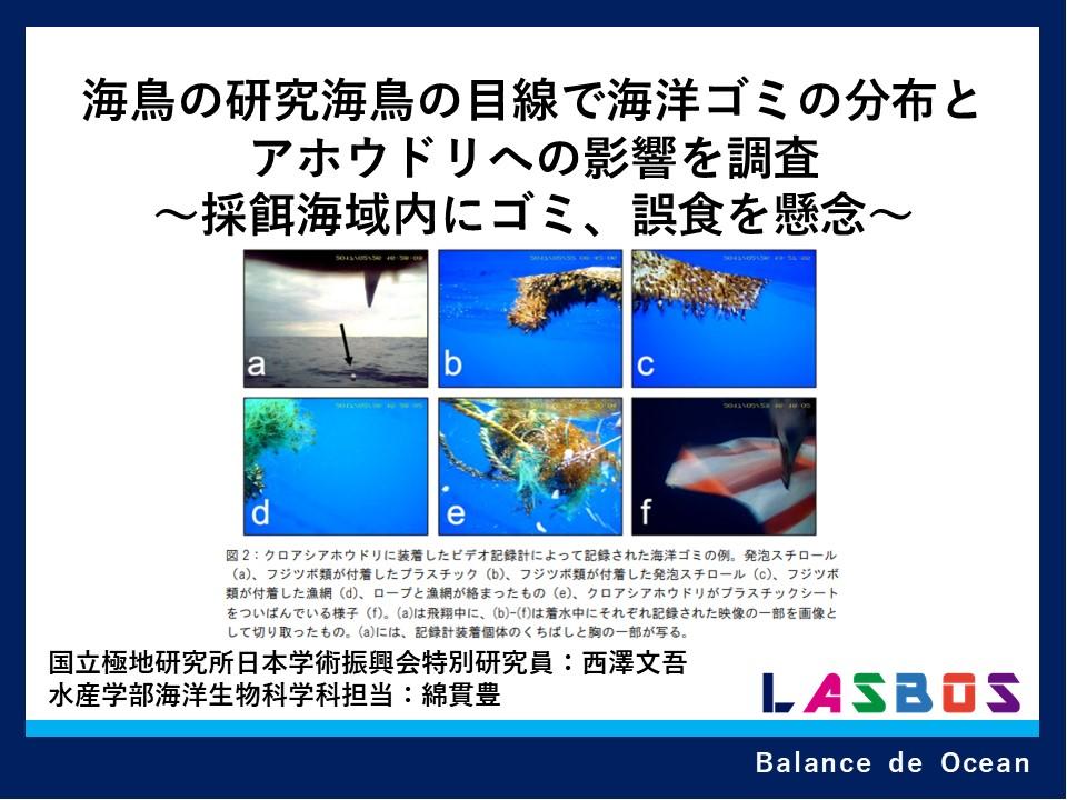 海鳥の研究海鳥の目線で海洋ゴミの分布とアホウドリへの影響を調査