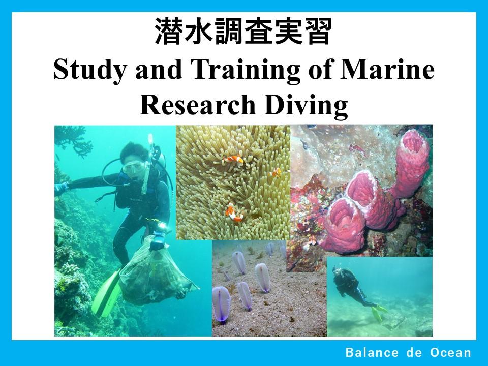 潜水調査実習