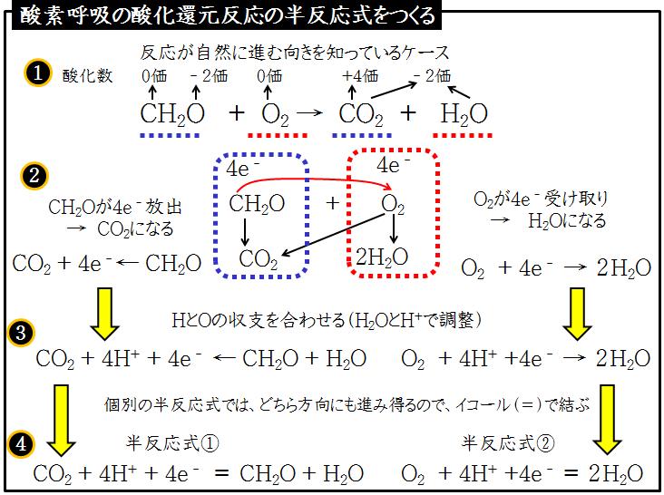 式 反応 の 呼吸 化学