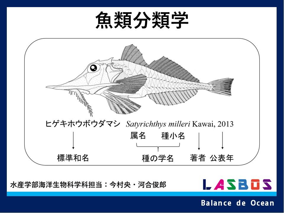 魚類分類学