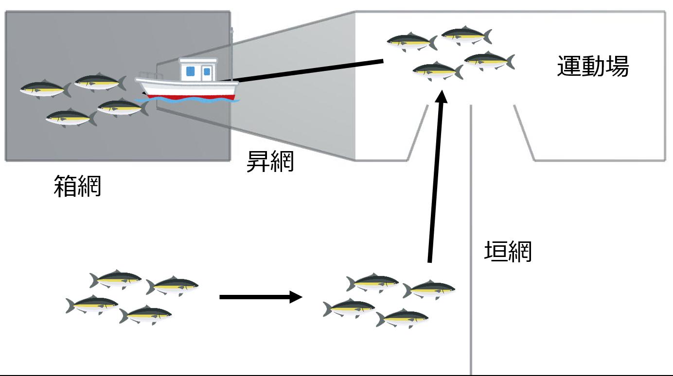 定置網漁業操業概念図