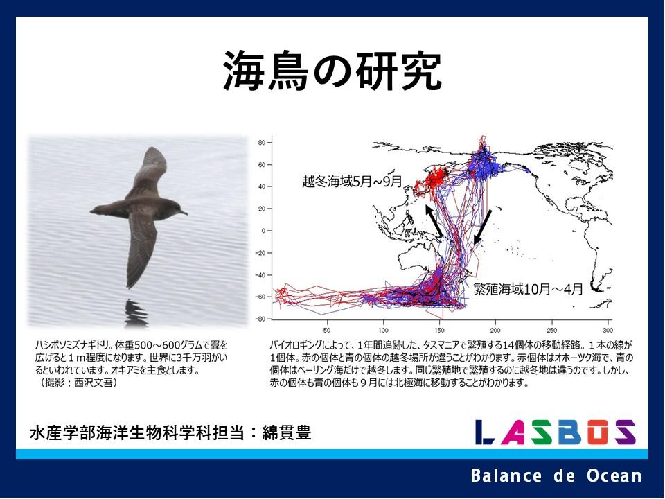 海鳥の研究