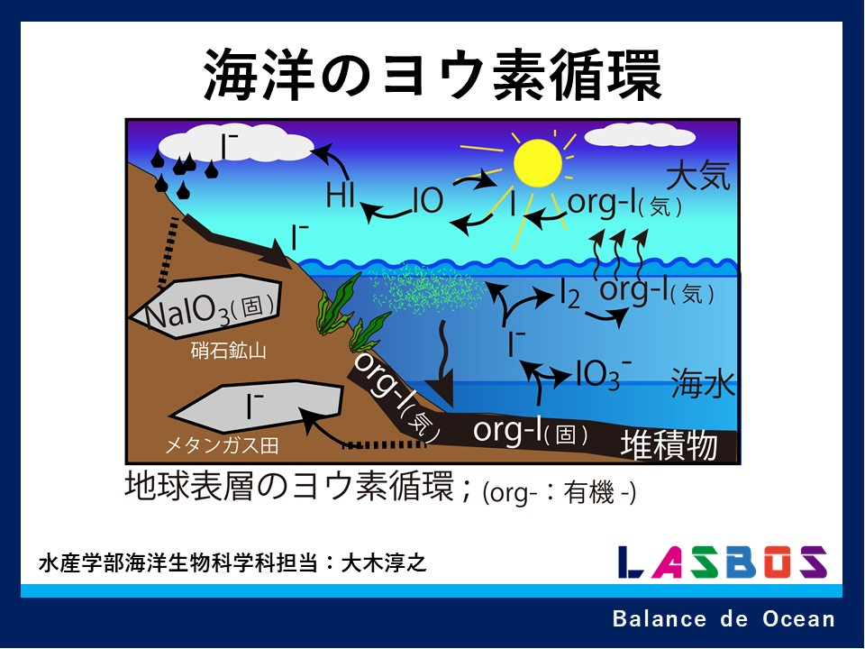 海洋のヨウ素循環の概要