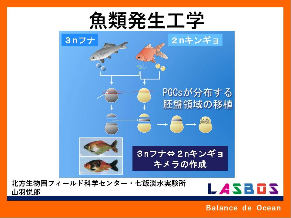 魚類発生工学