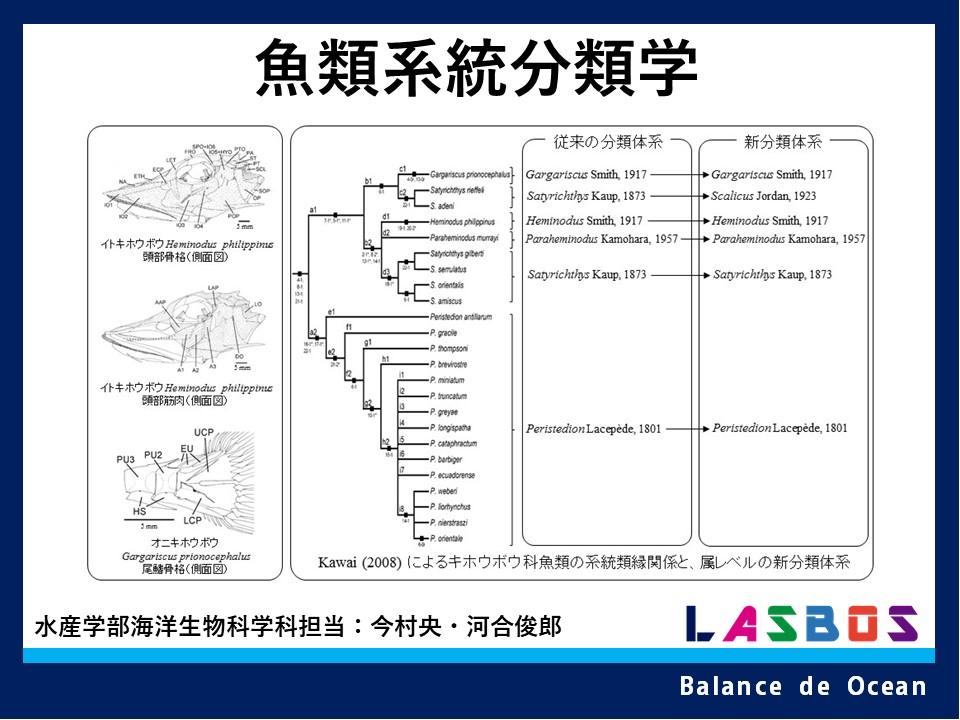 魚類系統分類学