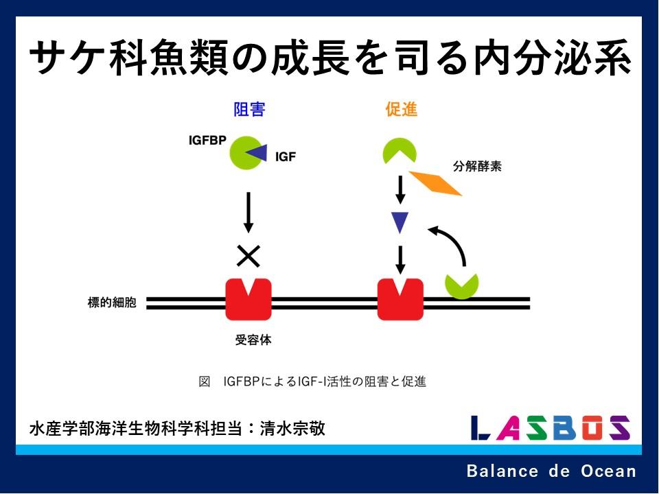 3 サケ科魚類の成長を司る内分泌系