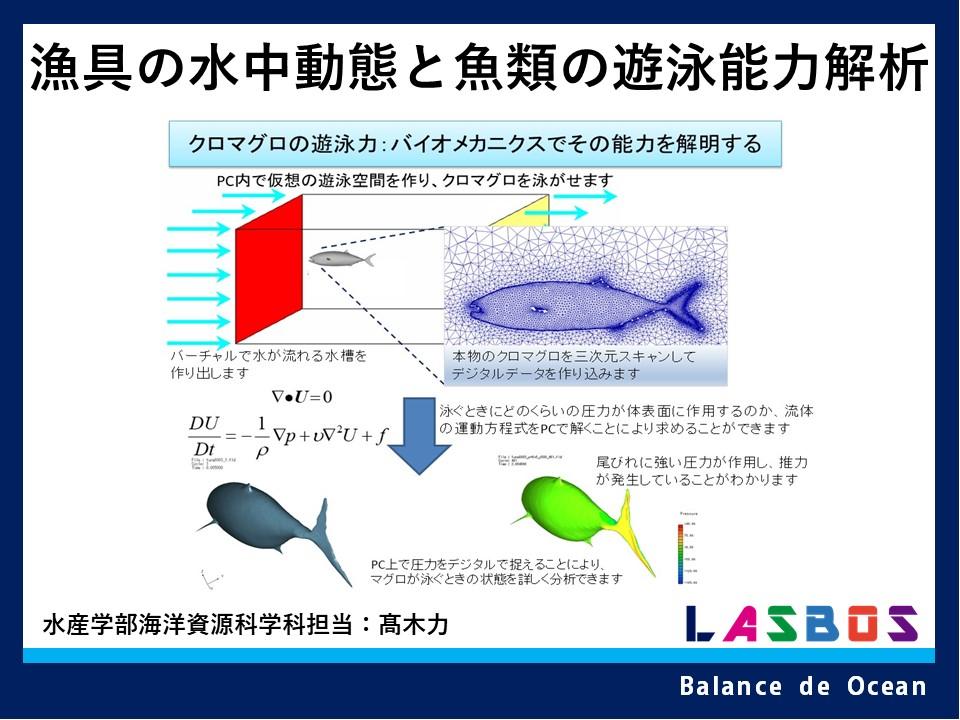 漁具の水中動態と魚類の遊泳能力解析