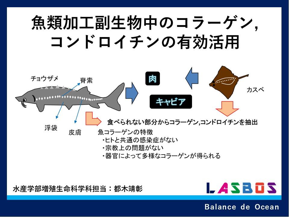 魚類加工副生物中のコラーゲン,コンドロイチンの有効活用