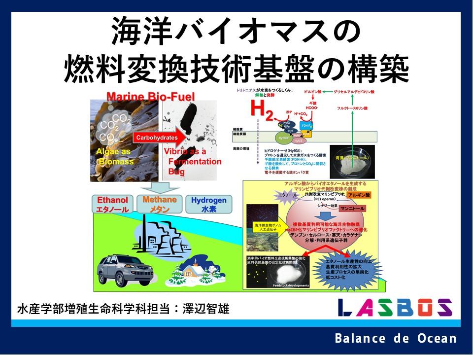 海洋バイオマスの燃料変換技術基盤の構築