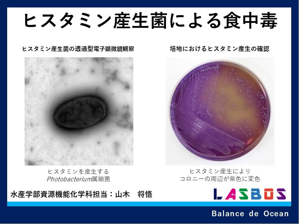 ヒスタミン産生菌による食中毒