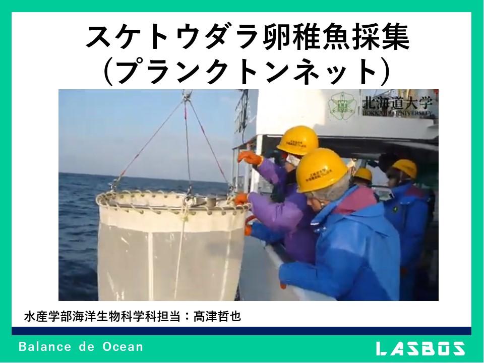 スケトウダラ卵稚魚採集(プランクトンネット)