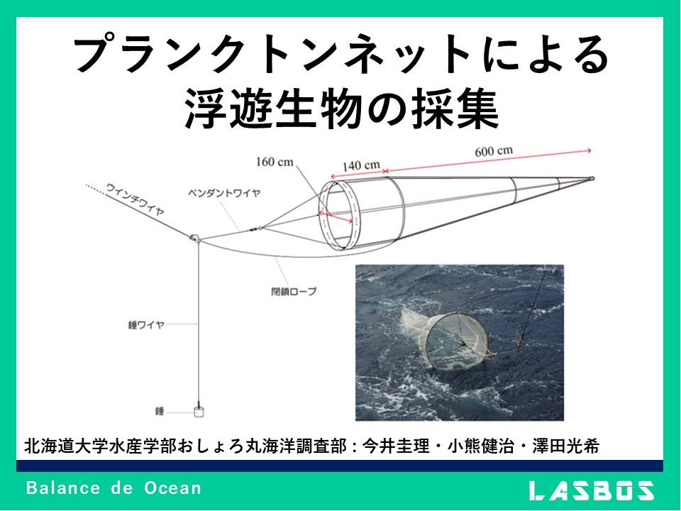 プランクトンネットによる浮遊生物の採集