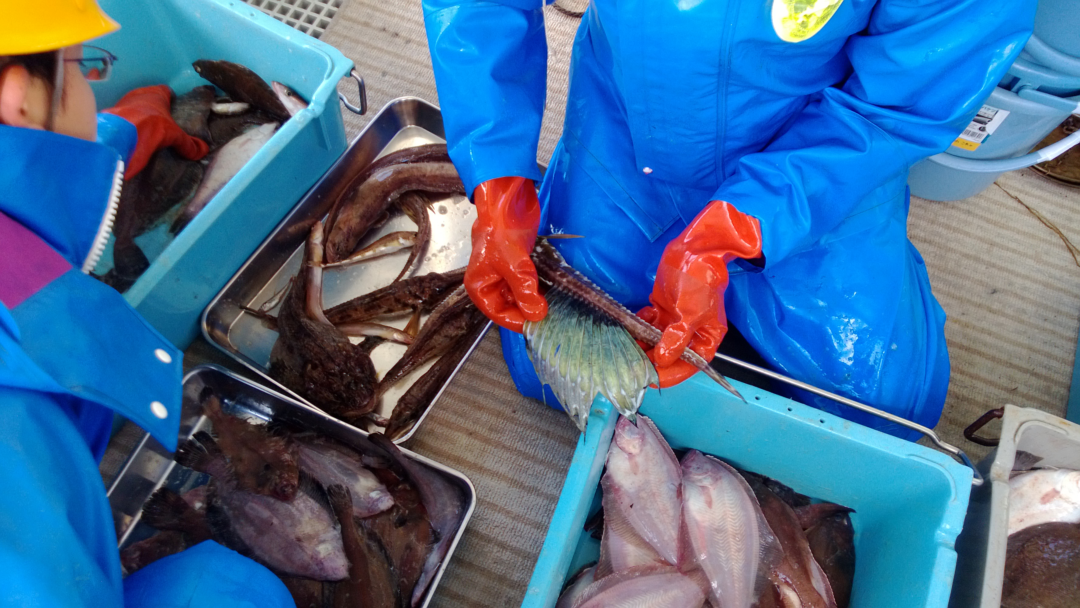 底曳網実習で採集された魚類