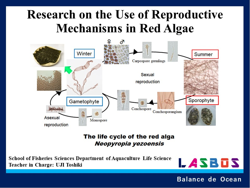 Research on the Use of Reproductive Mechanisms in Red Algae